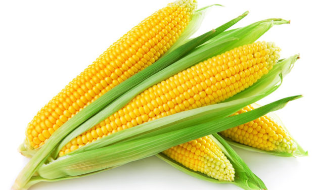 Genetic Variability Studies for Morphological, Qualitative and Quantitative Parameters in Sweet Corn